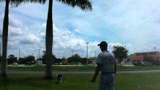 Learn Dog Training With Dennis Dalia,southwest K9 Academy Sw Florida