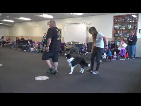 Training Show Dogs, Where do you start? With Eric Salas - Target Training Part 1