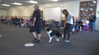 Training Show Dogs, Where do you start? With Eric Salas  Target Training Part 1