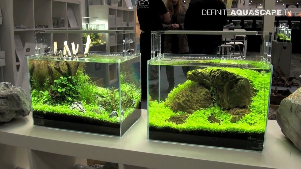 Aquascaping planted aquariums of aqua design amano deutschland heimtiermesse 2013 hannover - Design aquasacpe ...