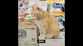 경동시장 명물고양이 뽁뽁이를 아시나요?
