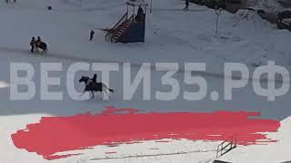 Шокирующее видео: в Череповце лошадь сбросила и протащила наездницу