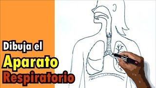 Dibujos del cuerpo humano 2/9 - Cómo dibujar el sistema respiratorio - Drawing respiratory system