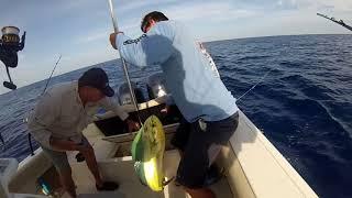 Fort Lauderdale Mahi Mahi fishing. Caught so many we lost count.