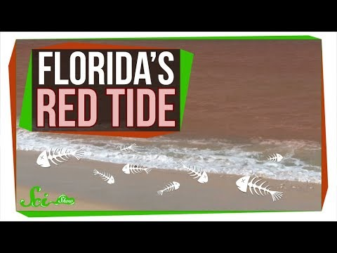 Why Florida's Red Tide Is Killing So Many Animals | SciShow News