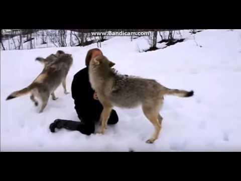Смотреть Животные встречают хозяев после долгой разлуки. ОЧЕНЬ ГРУСТНОЕ ВИДЕО( онлайн