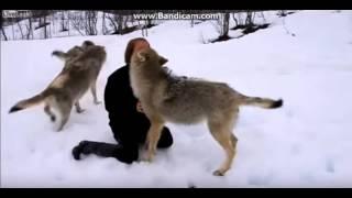 Животные встречают хозяев после долгой разлуки. ОЧЕНЬ ГРУСТНОЕ ВИДЕО(