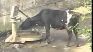 fall short   funny animal compilation video clips 2014