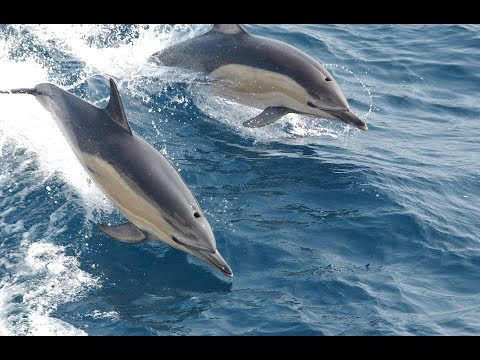 The Song of the Dolphins. The Healing that came from the Sea