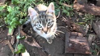 серые милые котята