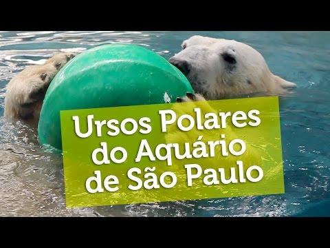 Ursos Polares do Aquario de Sao Paulo - YouTube