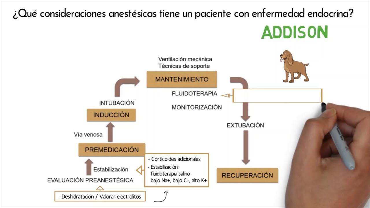Anestesia en Pacientes con Hipoadrenocorticismo