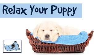 Music to Relax your Puppy -  Relaxing Music for Dogs with Anxiety