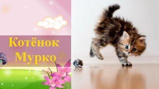Детский стих про котенка. Котёнок Мурко ✿ Домашние игры