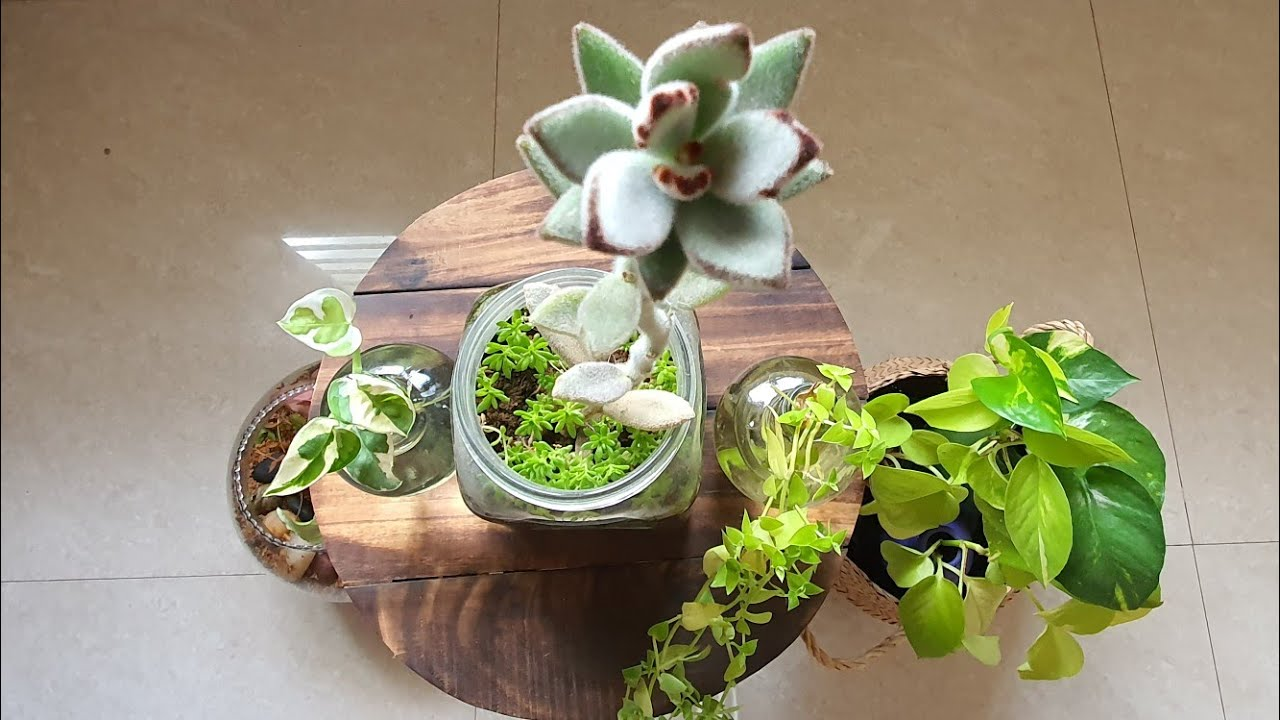The Signs Behind the Glass - Glass Containers in Gardening