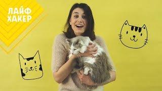 Не беси кота! Лайфхаки, которые помогут найти общий язык со своей кошкой
