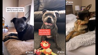 Tell your dog a story using the words they understand