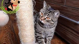 Когтеточка для кошек. Как приучить котенка к когтеточке. Почему кошка царапает?