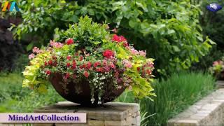 Garden and Flower Design Ideas  landscape house decoration
