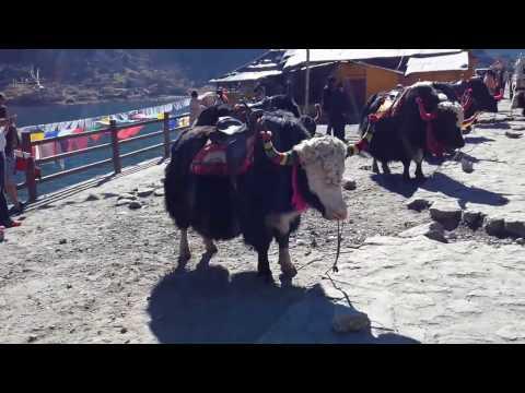 Changu Lake or Tsomgo Lake in December , Gangtok, Sikkim