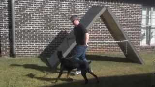 Doberman Introduction To A-frame