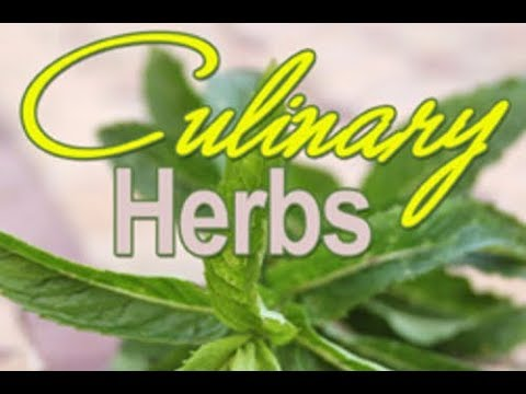 Uncommon Culinary Herbs that will Add Flavor and Health Benefits to Your Meal - Beyond Basil
