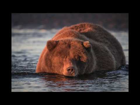 Lessons in Wildlife Photography with the Sigma 150-600 S lens