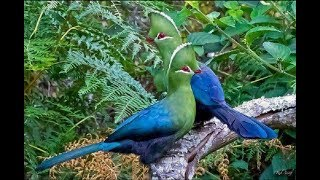 The Most Beautiful & Colorful Top 100 Rears Birds Of Paradise! Most...
