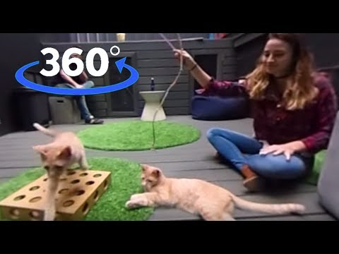 VR: Play With Cats at Koneko Cat Cafe in NYC (360° Video) | The Dodo VR