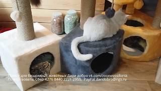 Очень нужная вещь для каждой кошки в доме | Мы радуемся и благодарим за помощь ! thumbnail