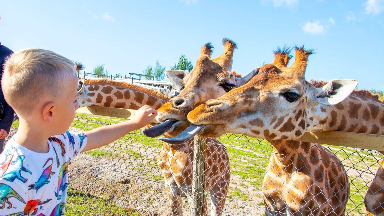 Download Gaby and Alex feeding animals at the Safari Zoo