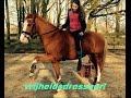 vrijheidsdressuur shake! | just horsefriends