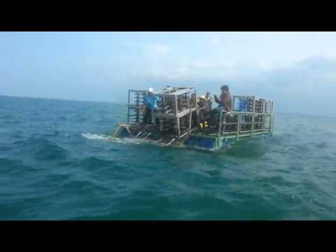 กฟผ. วางปะการังเทียมจากลูกถ้วยไฟฟ้าที่เกาะแลหนัง อ.เทพา