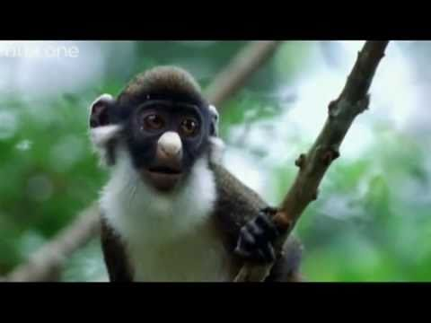 Funny Talking Animals - Walk On The Wild Side - The best BBC documentary ever!