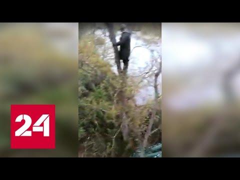 Медведь загнал рыболовов на деревья, ограбил их и попал на видео - Россия 24