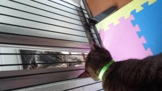 うちの猫が鳴いてるなーと思ったら初めて見る猫ちゃんが遊びに?きまし...