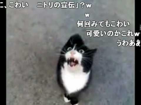 怒ってた猫が急に話しかけて来たけど、ネコ語だからわからない、コメ付