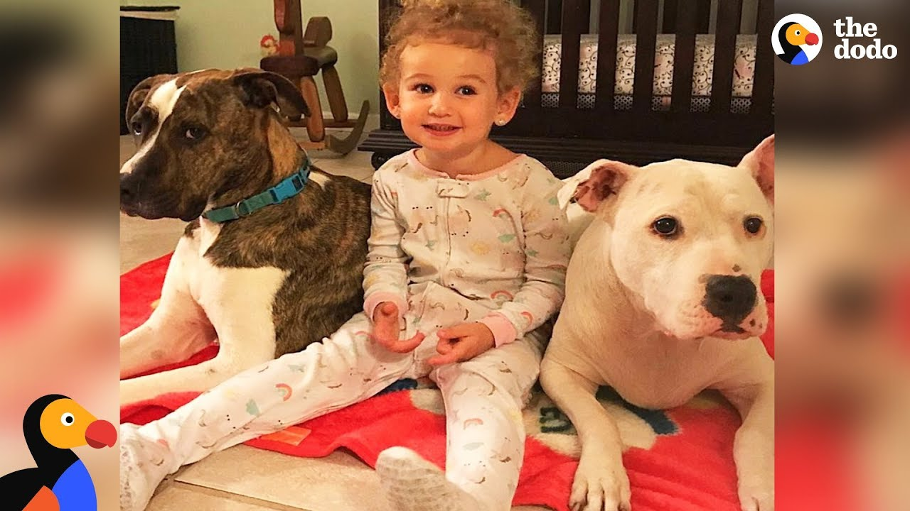 Girl Loves Taking Care Of Her Pit Bull Dog Best Friends | The Dodo