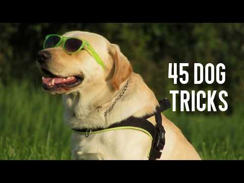 AMAZING 45 DOG TRICKS!