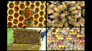 Marla Spivak Why bees are disappearing