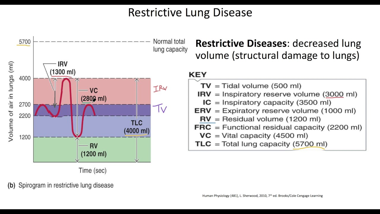 Physiology respiratory system restrictive lung disease youtube physiology respiratory system restrictive lung disease ccuart Choice Image