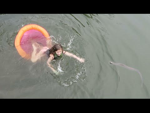 Swimming with Snakes (WK 271.2)   Bratayley