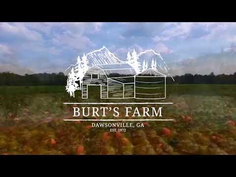 Shop Burt's Pumpkin Farm