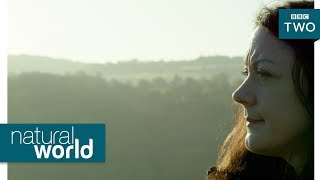 Wild goshawks - Natural World: Preview - BBC Two