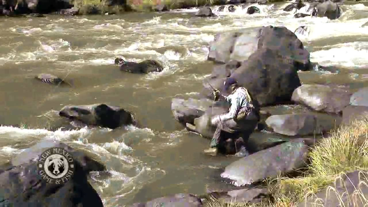 Fly fishing on the rio grande youtube for New mexico game and fish login