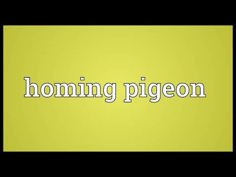 Homing pigeon Meaning