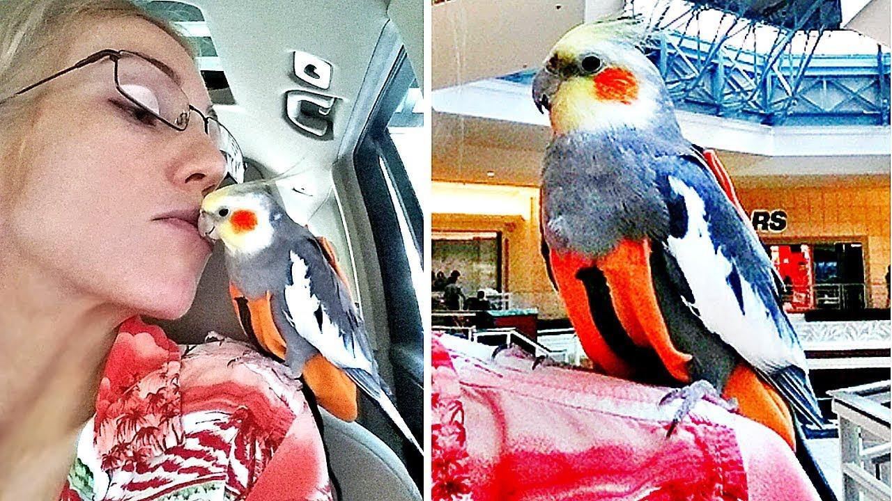 Taking my cute parrot for a walk flightsuit collection how to taking my cute parrot for a walk flightsuit collection how to put harness on bird jeuxipadfo Gallery