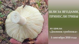 Шли за ягодами, принесли грибы. Дневник грибника 1 сентября 2018 года