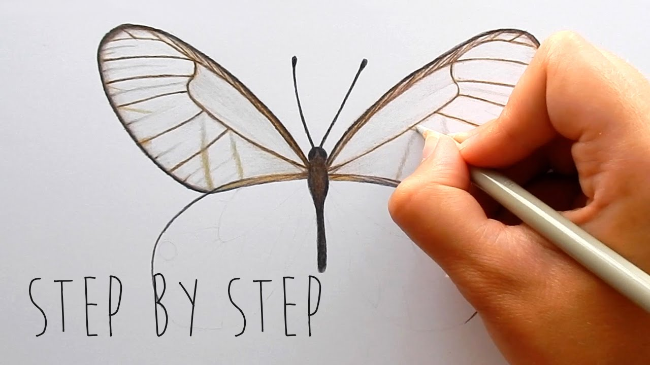 step by step how to draw and color a butterfly with colored
