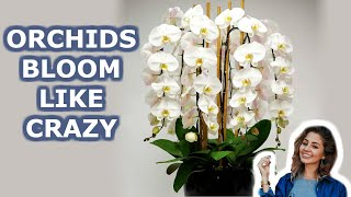 Your Orchid Will Bloom all Year Round. 7 Growing Orchids Tips You Should Know